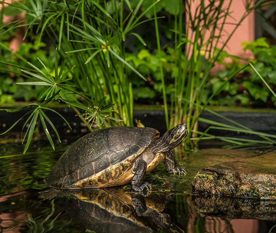 The Brennan's turtles