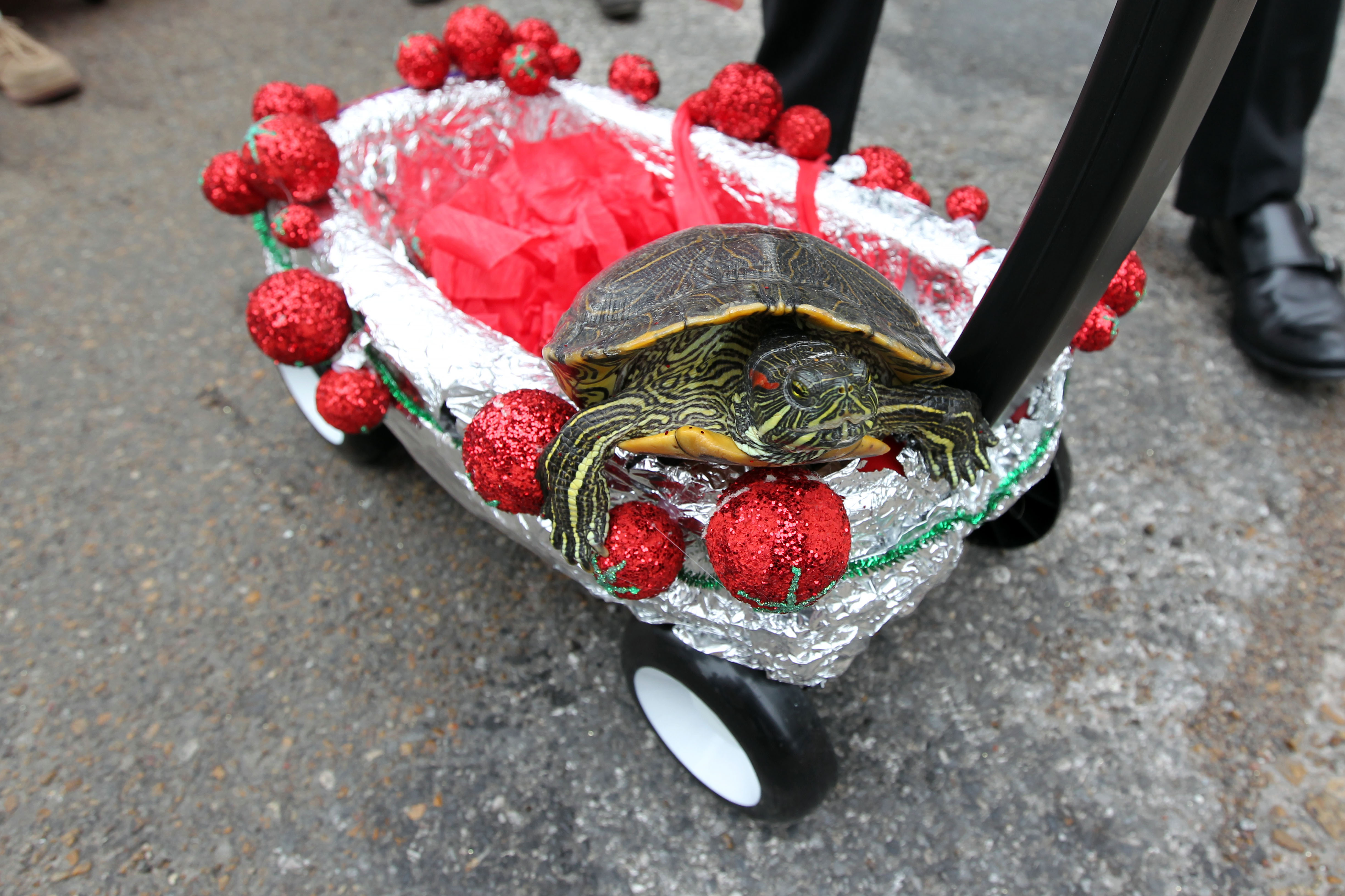Promotion for 2019 Turtle Parade